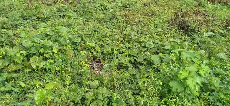 Polícia Civil investiga morte de 12 gatos em Itaporanga D'Ajuda, SE