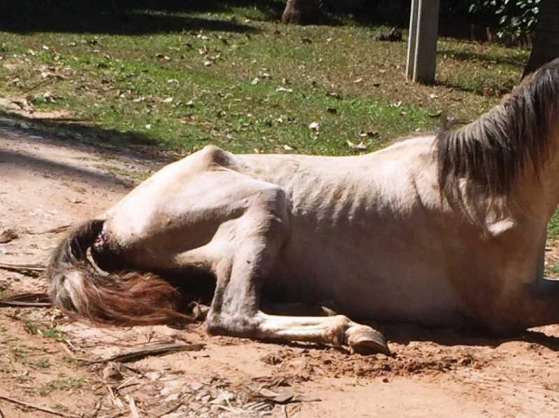 Prefeitura de Marília (SP) resgata dois cavalos em situação extrema de maus-tratos