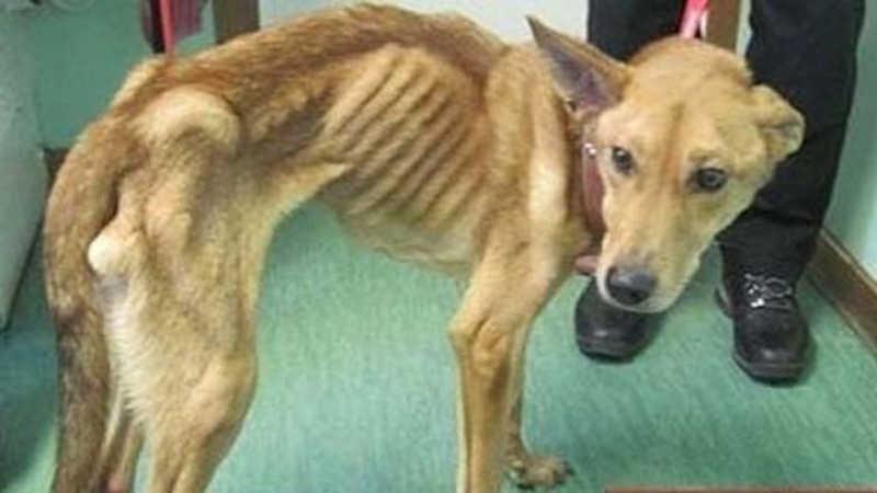 Lei contra agressores de animais em Mogi das Cruzes (SP) ficará mais severa