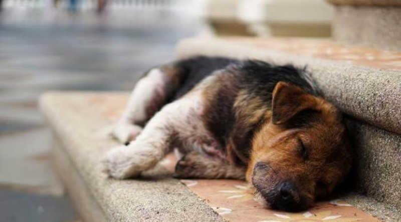 Atualmente, por conta da vereança, Fernanda é voluntária na Ong e, segundo ela, a maior parte dos cerca de 50 cães e 80 gatos atualmente assistidos pela FERA e que estão à espera de adoção, é formada por vítimas de maus-tratos e abandono.