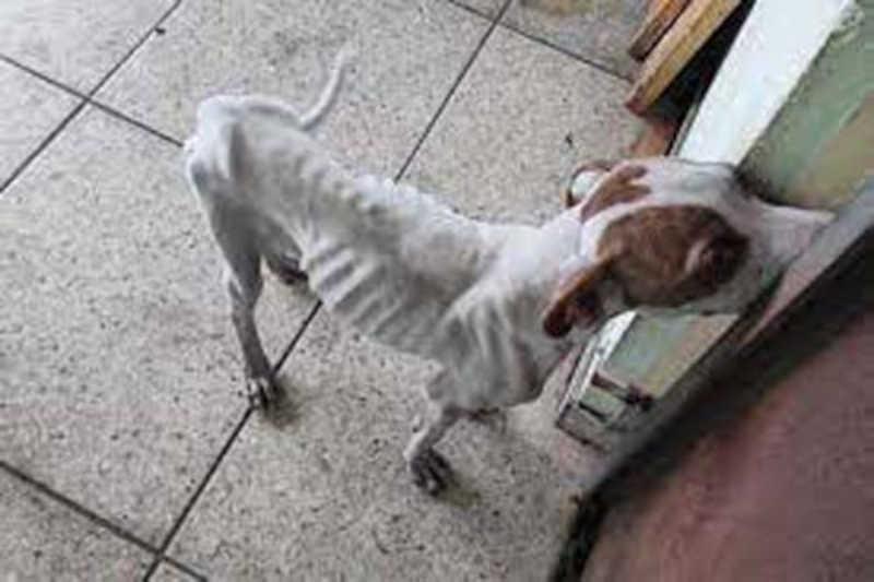 Imagens extraídas nas redes sociais e de Ongs que fazem a defesa dos animais maltratados