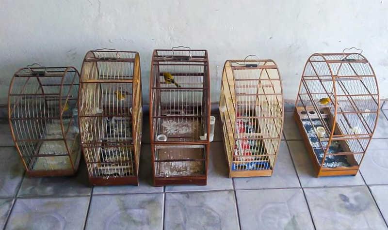 Homem é multado em R$ 3 mil por manter aves em cativeiro ilegalmente em Pindamonhangaba, SP