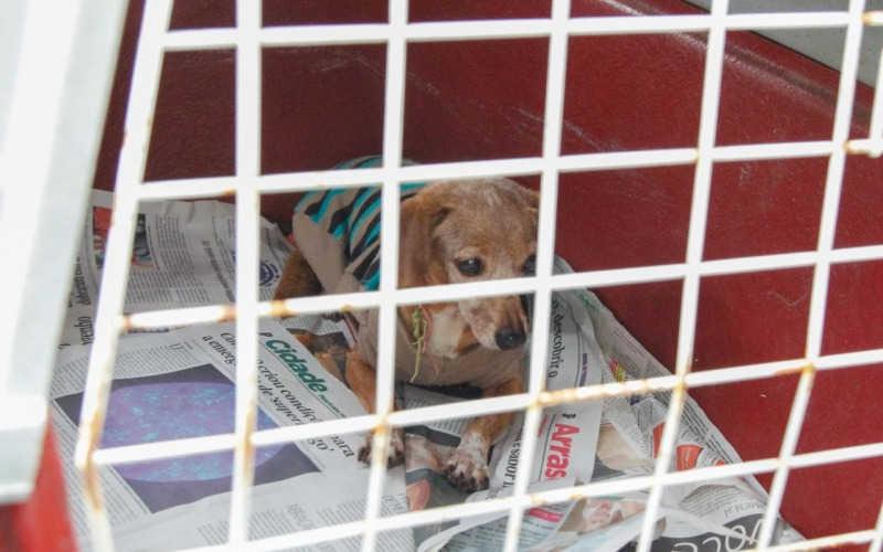 Tutora deixa cão idoso no CCZ e cospe em vereadora, em Piracicaba, SP