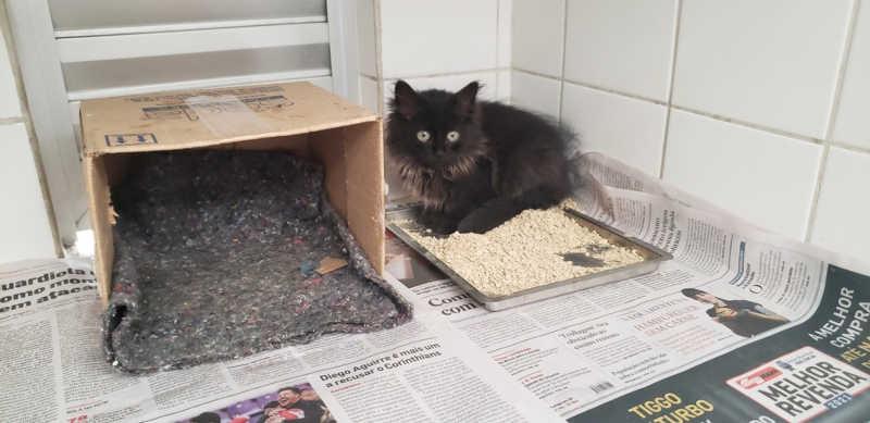 Campanha arrecada jornais para animais do Canil Municipal de Piracicaba, SP