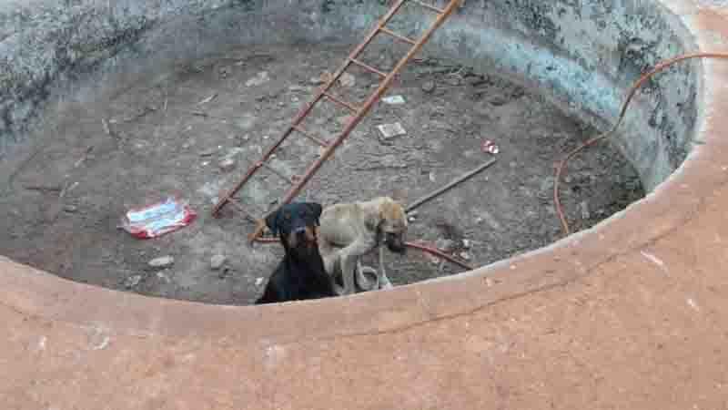 Vídeo mostra o emocionante resgate de cães que passavam fome em Ribeirão Preto, SP