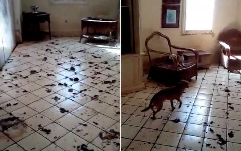 Casa onde cães estavam na zona Sul de Ribeirão Preto, SP, é achada lotada de fezes — Foto: Daniela Bertalo Azevedo