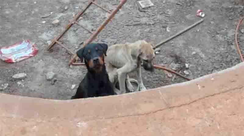 Cães encontrados sem comida em tanque de cimento em Ribeirão Preto. Foto: Reprodução/EPTV