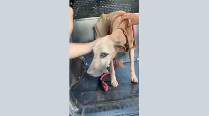 Cão da raça Fila encontrado em tanque de cimento na zona norte de Ribeirão Preto. Foto: Reprodução/EPTV