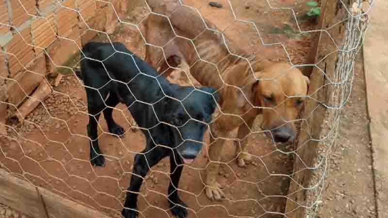 Projeto que cria campanha contra o abandono de animais em São Carlos (SP) é aprovado