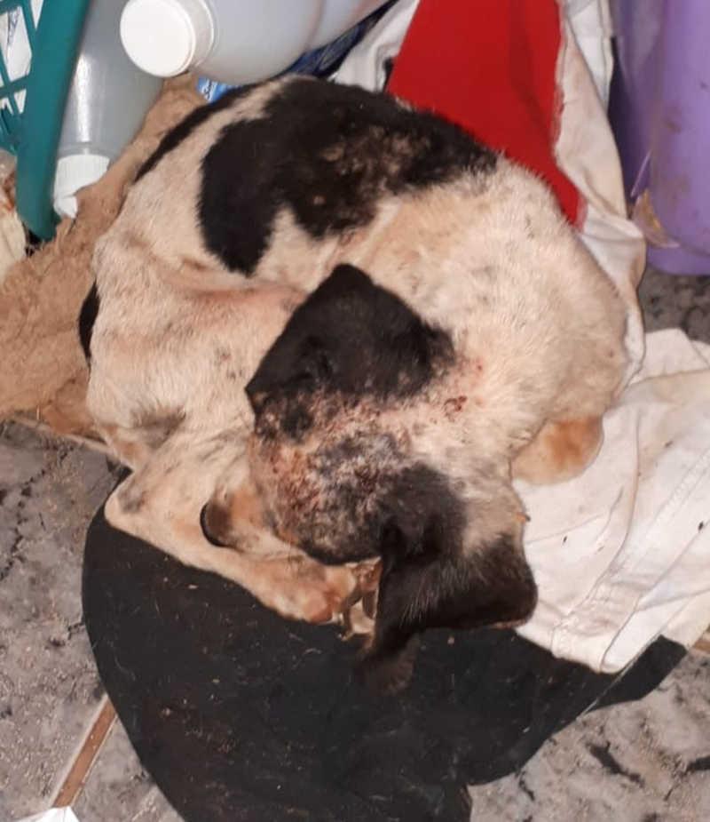 Cachorro encontrado sem alimentação e água em casa é resgatado em Teodoro Sampaio, SP