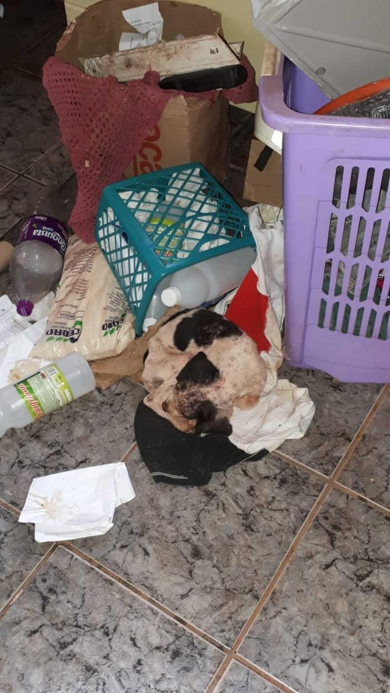 Cachorro foi encontrado em um local sujo, sem alimentação e água e com sarna — Foto: Polícia Ambiental