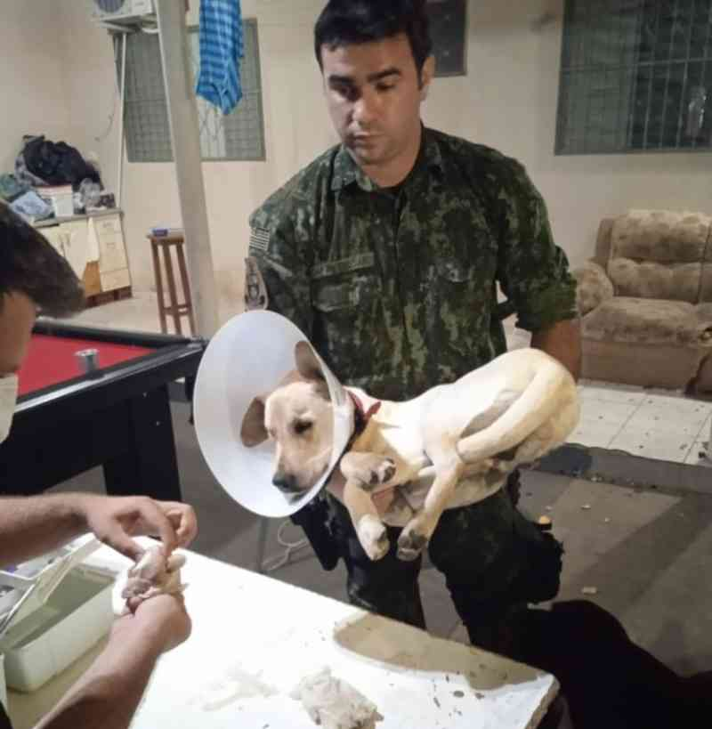 Universidade repudia castração irregular e expulsa estudantes de medicina veterinária