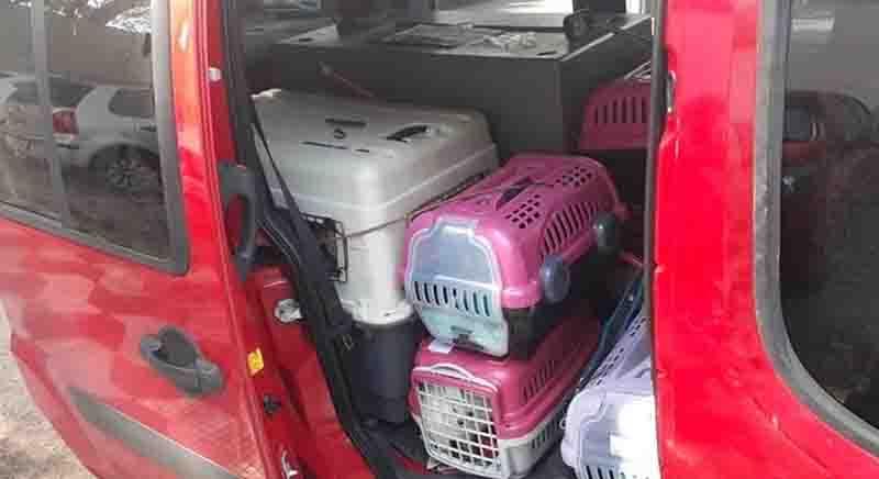 Grupo que entregaria cerca de 40 cães a compradores é detido por maus-tratos em SP