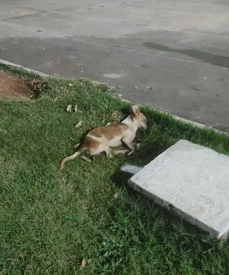 Morte de cães assusta moradores de Alvorada (TO) e veterinário diz que animais estão sendo envenenados