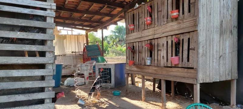 Local era adaptado para realização de brigas de galo — Foto: Divulgação/38ª Delegacia de Arapoema