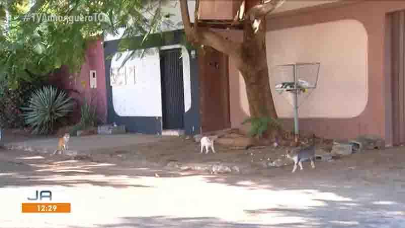 Gatos em rua da quadra. Foto: Reprodução