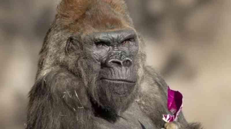 Centro de informação sobre COVID-19 em primatas não humanos