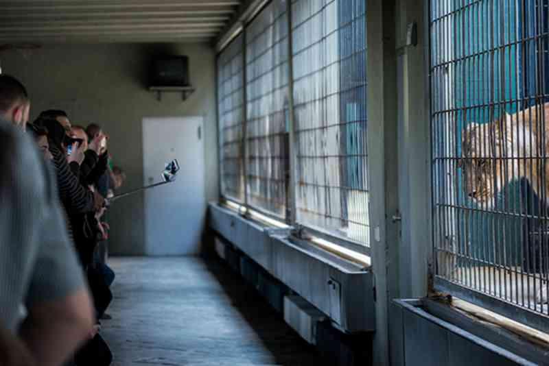 Ela usa a fotografia para escancarar a infelicidade de animais presos em cativeiro