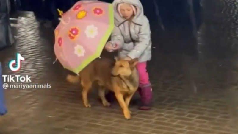 Cachorrinho estava exposto à chuva até ser ajudado pela menininha.
