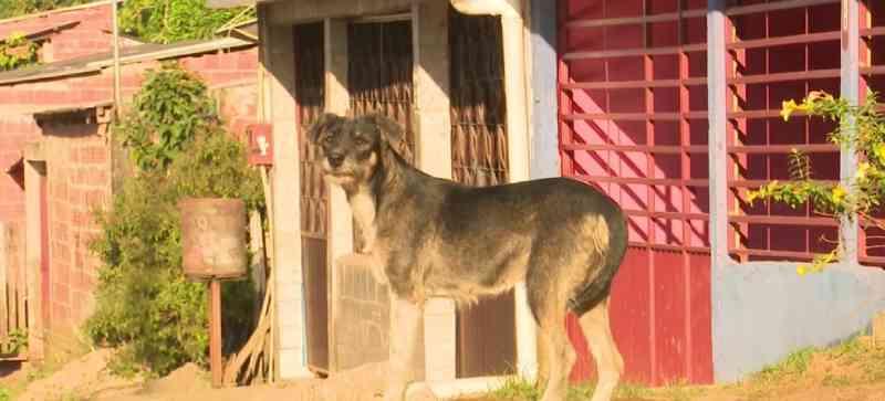 Em Rio Branco também é constante a presença de animais abandonados nas ruas. — Foto: Reprodução/Rede Amazônica Acre