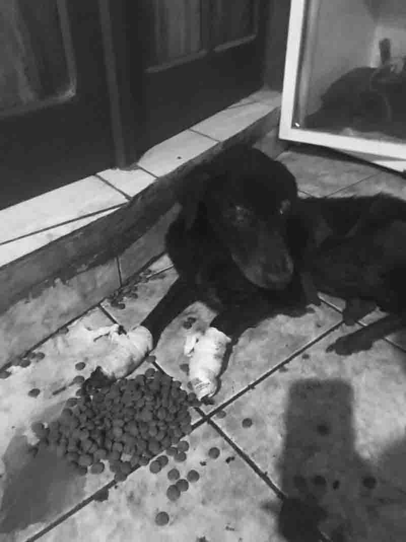 ONG que denunciou tutor por maus-tratos contra cadela diz que animal morreu, em Cruzeiro do Sul, AC
