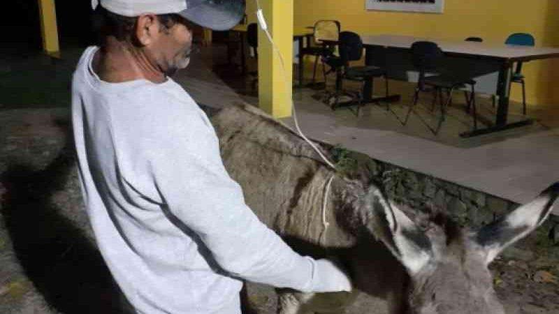 Jumenta foi medicada após facada, mas não resistiu e morreu em Penedo. Foto: Divulgação