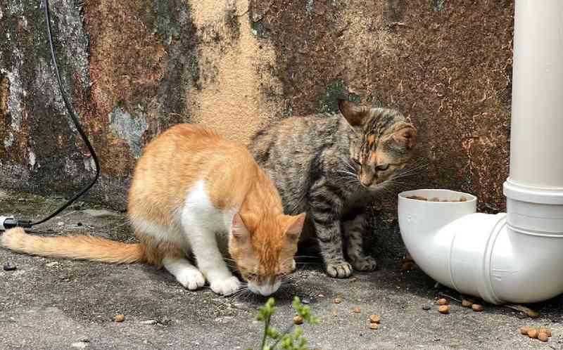 Derrubada a liminar que impedia a alimentação de animais comunitários em Manaus, AM