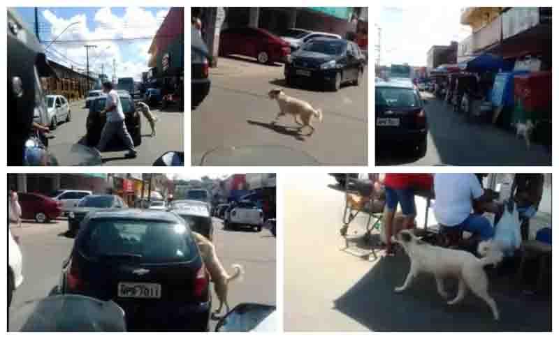 Revoltante: homem abandona o próprio cachorro em via pública de Manaus; vídeo