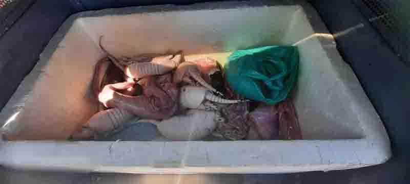 Cuba com carnes de animais silvestres apreendida pelo Batalhão Ambiental. Foto: Batalhão Ambiental/Divulgação