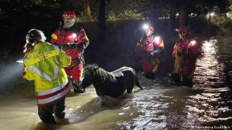Socorristas resgatam pôneis de área alagada.