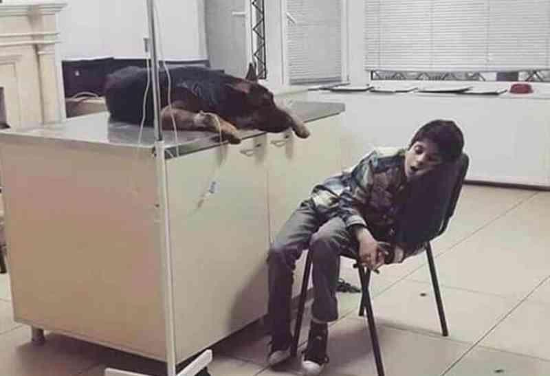 Criança dorme em clínica veterinária para não deixar cachorro sozinho