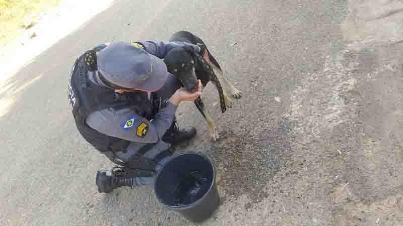 Homem é preso após espancar e enforcar cachorro no meio da rua em Araguaiana, MT