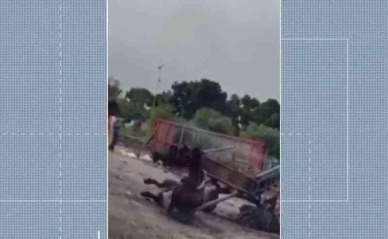 Cavalo cai após puxar carroça com excesso de peso em Feira de Santana (BA); veja vídeo