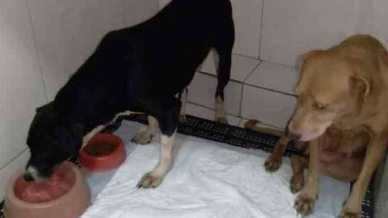 Cães ficam presos em apartamento por 25 dias após tutores morrerem, em Salvador, BA