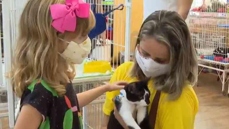 Gatos resgatados em incêndio são colocados para adoção em Salvador. — Foto: Reprodução/TV Bahia