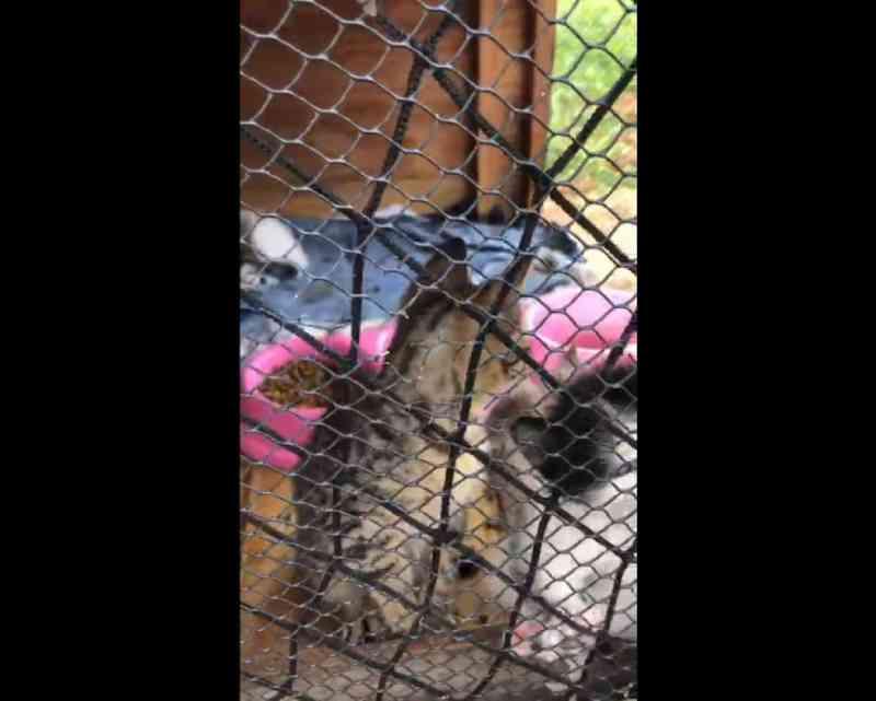Filhotes foram resgatados após incêndio que atingiu 'colônia' de animais no bairro de Piatã, em Salvador. — Foto: Reprodução/Redes Sociais