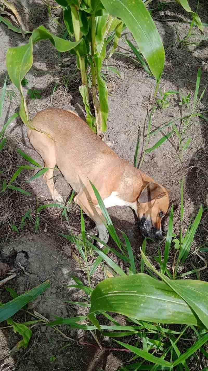 Animais são envenenados na região das Palmeiras em Amargosa, BA