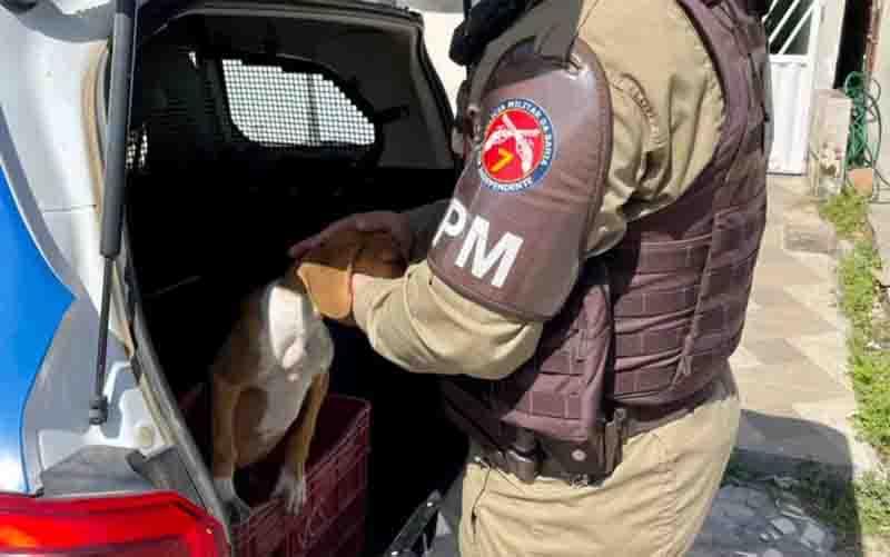 Após denúncias de maus-tratos, cadela é resgatada pela PM no sul da Bahia. Foto: Divulgação/SSP-BA