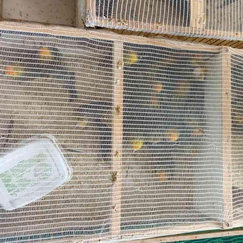 Pássaros resgatados na BR-101 — Foto: Divulgação / PM-BA