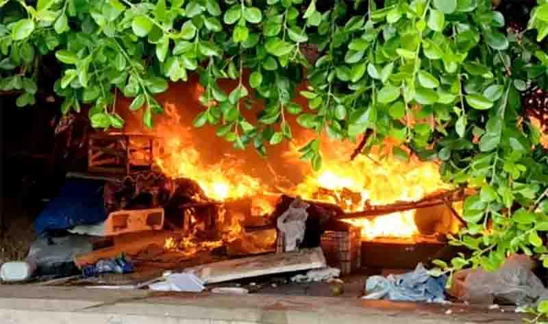 Representantes de ONG dizem que um gato morreu e outro foi internado após incêndio em 'colônia' na orla de Salvador, BA