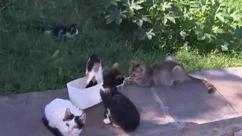 Animais abandonados na 'colônia de gatos' em Piatã. Foto: Reprodução/TV Bahia
