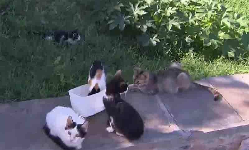 Após incêndio, prefeitura abre cadastro para interessados em adotar gatos da 'colônia' de Piatã, em Salvador