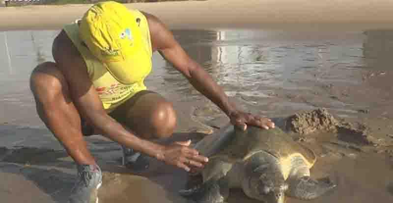 Tartaruga-marinha encalhada na praia de Jaguaribe. Foto: Reprodução/TV Bahia