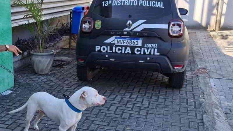 O animal foi capturado no Bairro Sapiranga, em Fortaleza, onde os ataques aconteceram. — Foto: SSPDS/Reprodução