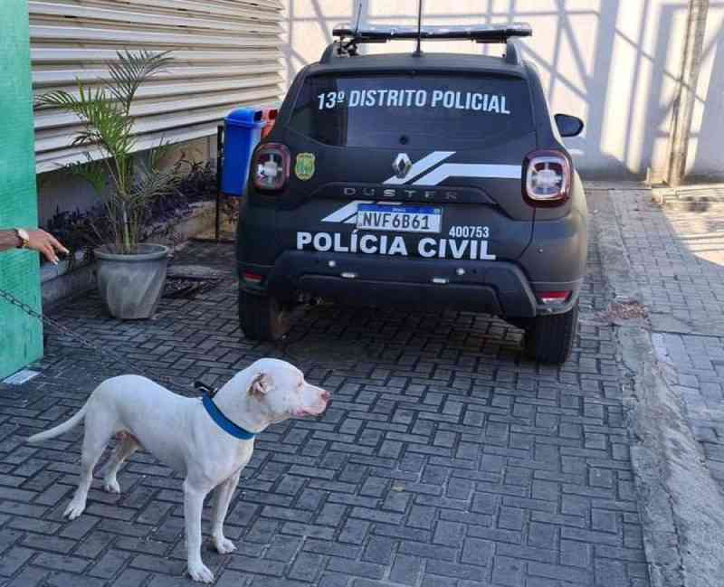 Omissão de cautela: pit bull que atacou animais em Fortaleza (CE) é resgatado pela polícia