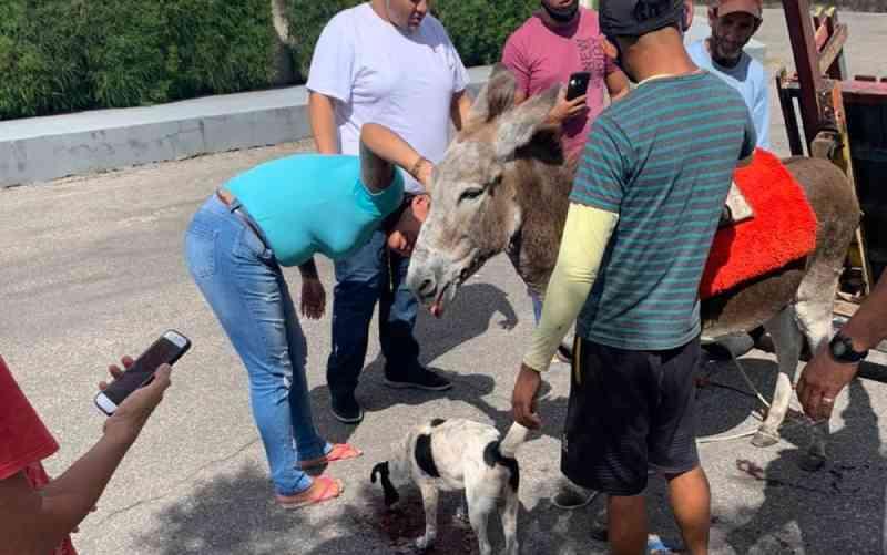 Jumento é atacado por cão da raça pitbull, em Fortaleza. — Foto: Reprodução