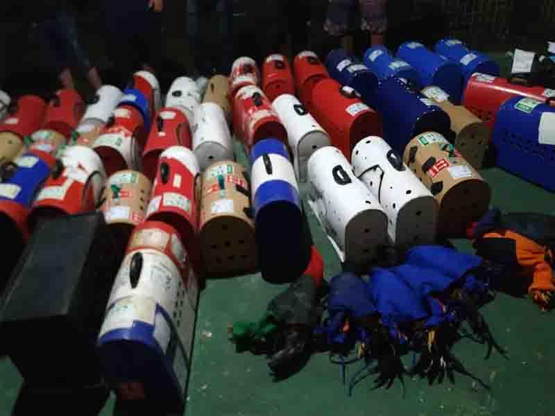 Mais de 200 galos que eram usados em rinha foram apreendidos pelo Batalhão de Polícia do Meio Ambiente em um sítio em Maracanaú. Foto: Polícia Militar/ Divulgação
