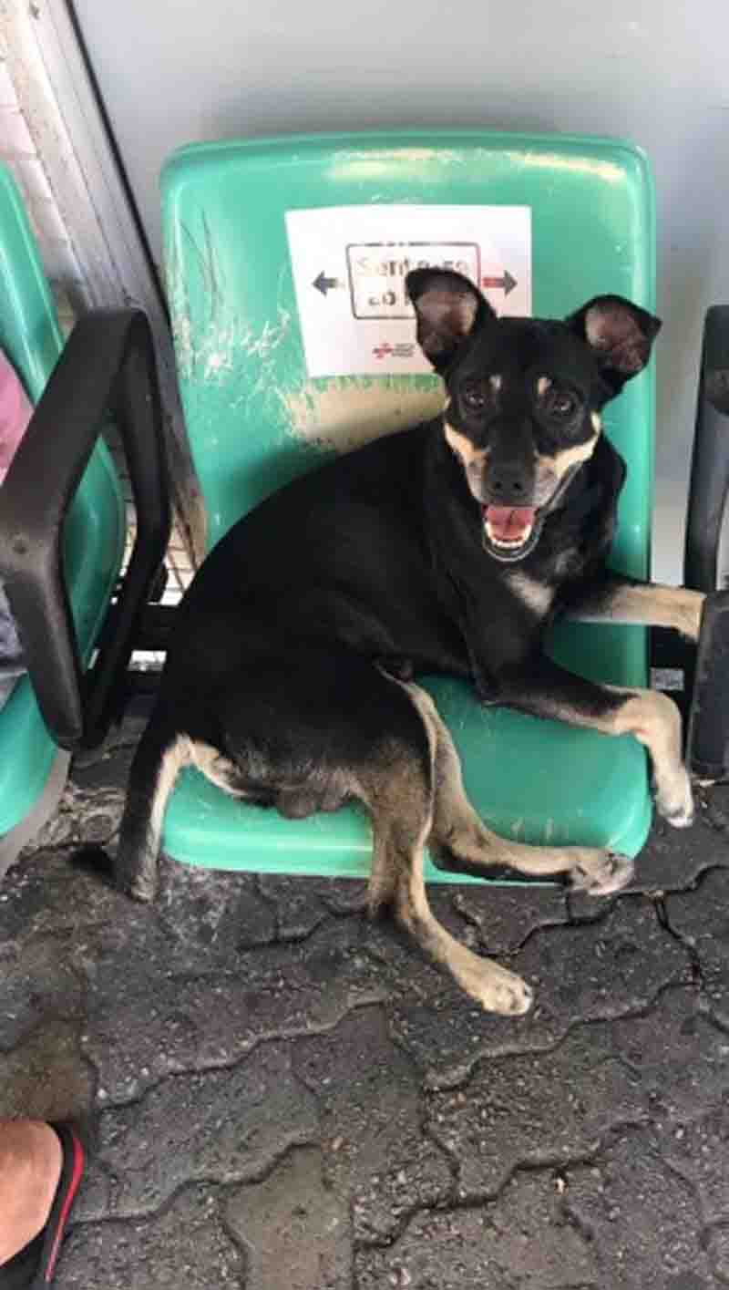 Cachorro é colocado para adoção após passar meses esperando tutor em hospital de Fortaleza, CE