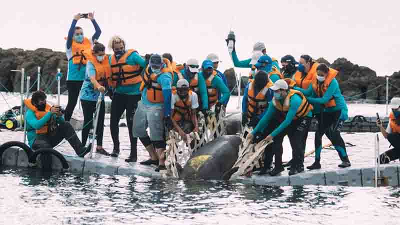 Legenda: Pintada volta ao mar após seis anos Foto: Geice Magalhães / ONG Aquasis