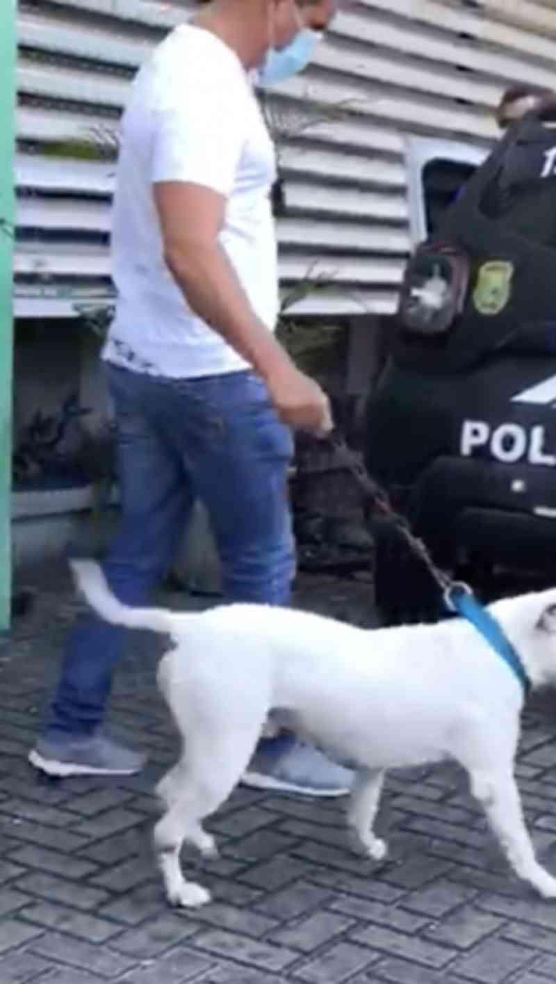Tutores de pit bull que atacou animais em Fortaleza (CE) são investigados por maus-tratos
